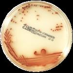 Хромогенный агар chromID...